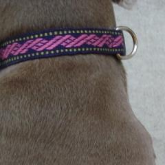 DogCollar