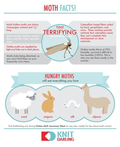 All About Moths - Via KnitDarling.com