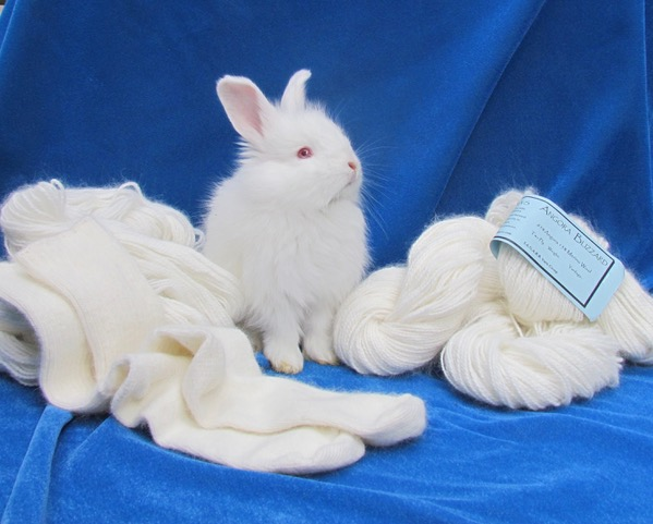 Angora rabbit and yarn